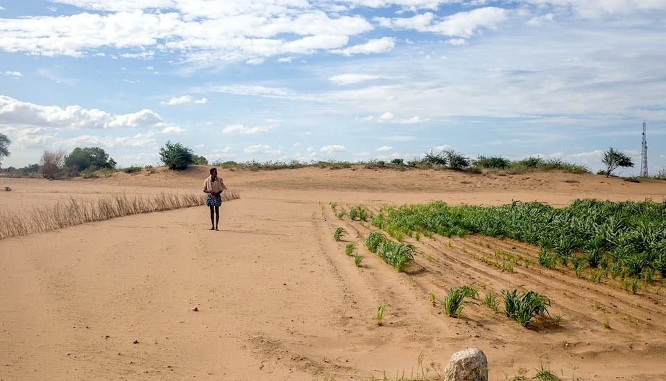 The desertification of Rayalaseema has intensified the farming crisis in the region (Photo by Rahul M.)