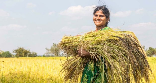 Farmers across India revive folk rice varieties