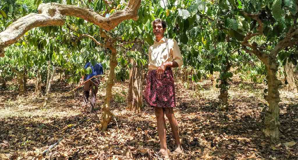 Coffee farmers like Augustine Vadakil are struggling with declining returns (Photo by Vishaka George)