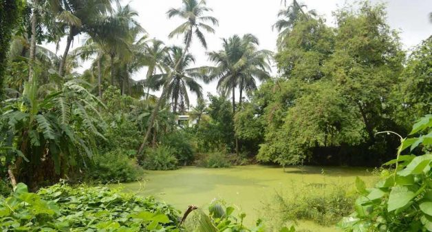 Many traditional water ponds such as this one in Vasai are in disrepair and not in use (Photo by Hiren Kumar Bose)
