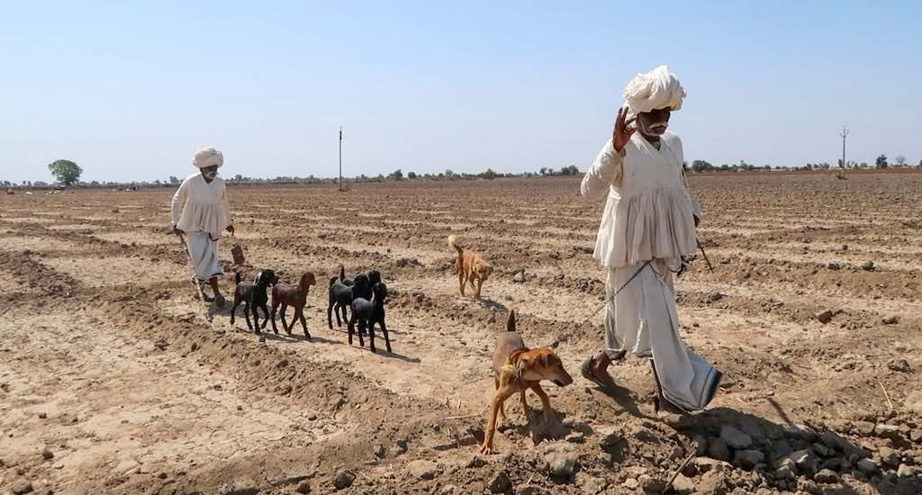The walk is getting longer for Gujarat's pastoralists (Photo by Namita Waikar)
