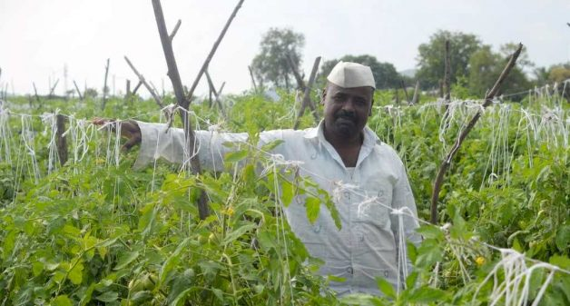 Sinnar farmers switch to multi-cropping for resilient earnings