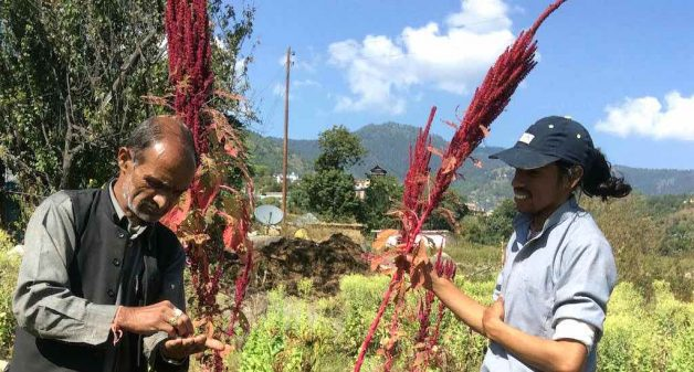 Himachal's organic farmers turn market-savvy