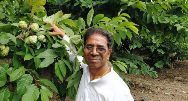 Custard apple thrives in Maharashtra's dryland farms