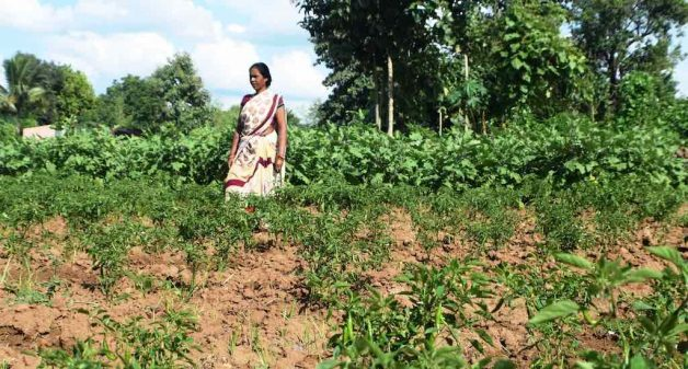 Kitchen gardens improve nutritional diversity of Kondhs
