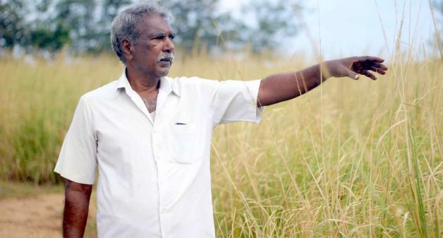 Coastal farmers harvest riches with hardy vetiver