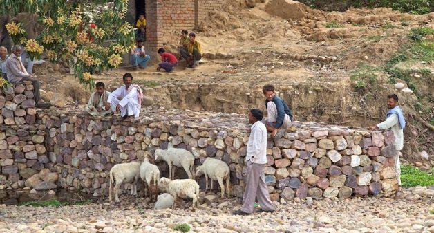 पैसा एवं पुरूषत्व: ग्रामीण परिवारों में बदलती लैंगिक भूमिकाएं