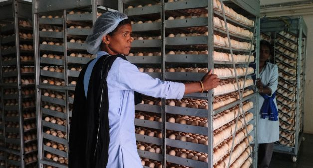 Misconceptions about COVID-19 result in poultry value chain erosion – ..