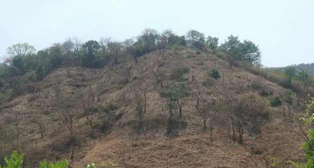 Sahyadri farmers practice shifting cultivation amid ecological concerns