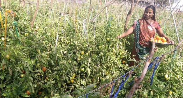 Crop diversification helps farmers double income