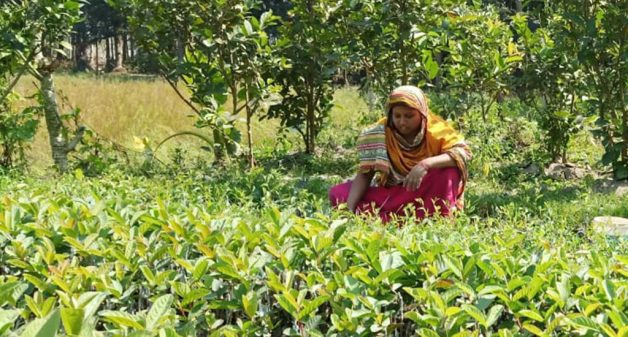 Plant nurseries bear fruits of success, empowerment for women
