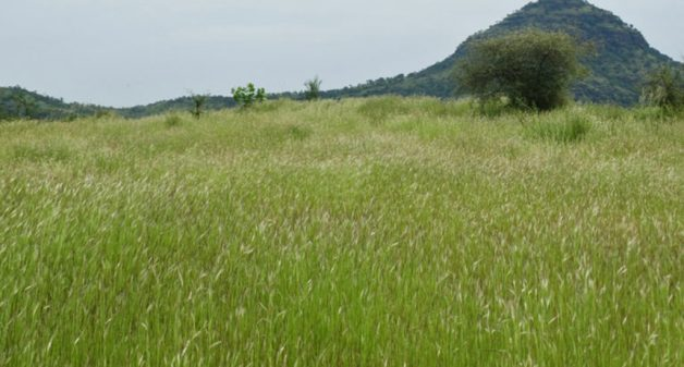 Community restores grasslands, makes village drought-resilient