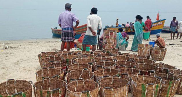 Climate change disrupts livelihood of Kerala's fishers